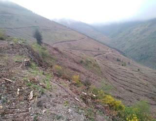 Haritzalde Naturzaleen elkarteak «atentatu ekologikoa» salatu nahi du